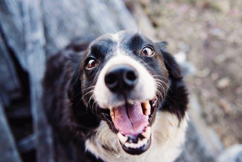Adopción de mascotas.jpeg II