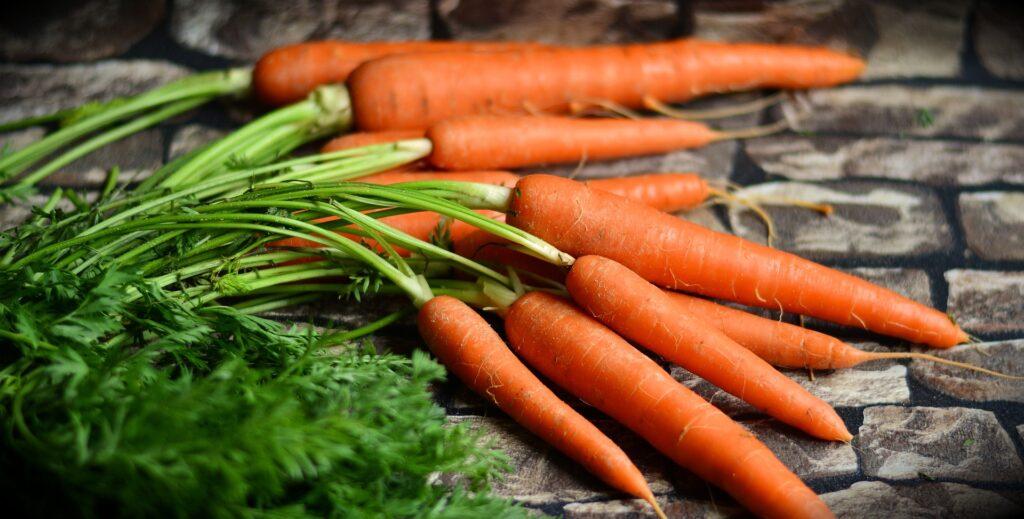 Beneficios de la zanahoria para los perros