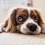 Paseos de tu perro
