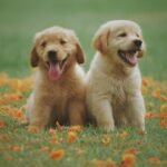 Eliminar las pulgas del perro